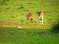 Canguri-Australia-www.winki.it
