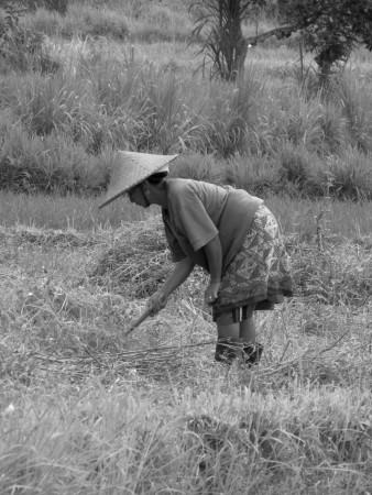 Donna al lavoro nei campi