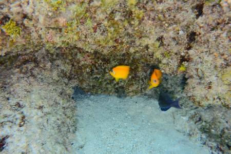 Alcuni pescetti colorati del Giardino dei Coralli
