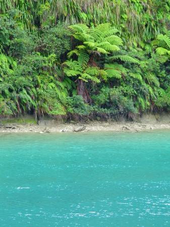 Il fiume nei pressi delle Tree Sisters - SE Isola del Nord