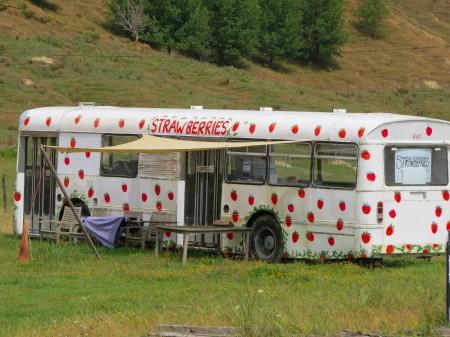 Strawberries bus