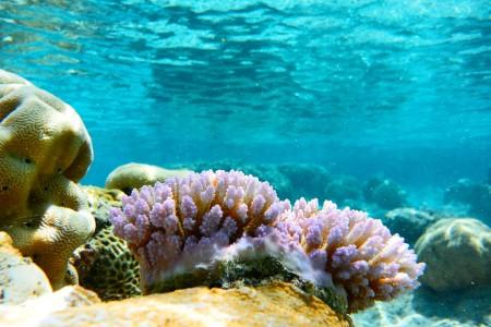 The Coral Garden di Atiu